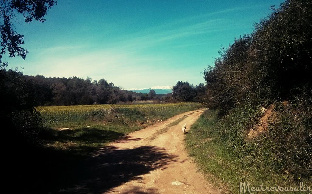 Meditar con la respiración: Respirar es Ser