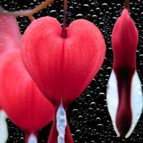 Vivir desde el amor: herramientas y ejercicios para reconectar con el corazón