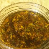 Recolección y elaboración de aceite de hipérico - recetas chamánicas